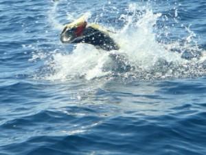jumpingfishs