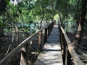 brdge-curu-private-nature-reserve-costa-rica