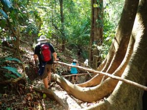 hiking-in-curu-private-reserve-costa-rica